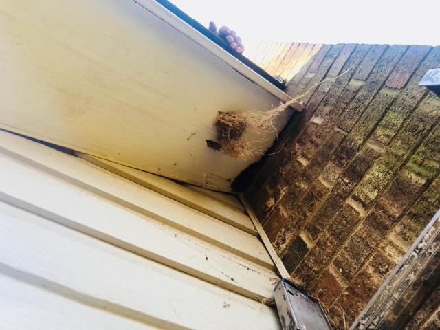 Charlotte, NC - Hum, somebody made a cozy home in this eave and caused a leak.