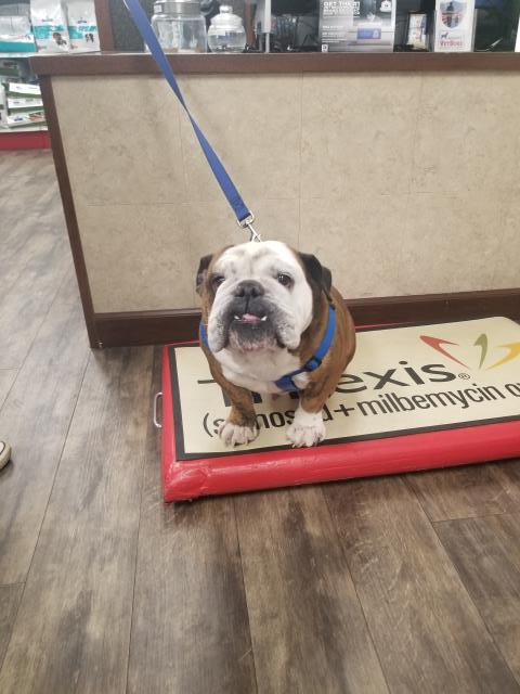 Omar took a seat on our scale (like a good boy) last week and did not want to get down! We all admire Omar's confidence to get on the scale without a second thought.