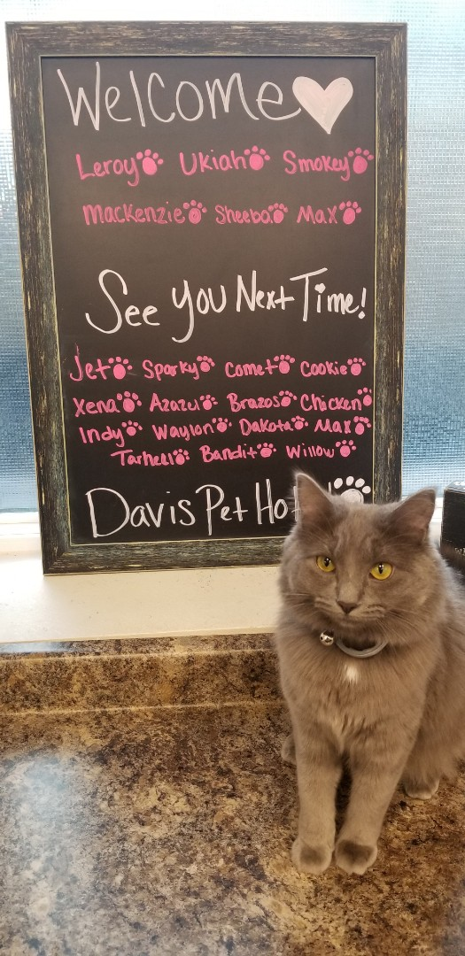 Pensacola, FL - Jewel looks forward to welcoming all your furry friends to our hotel! Book today! :) #DavisPetHotel
