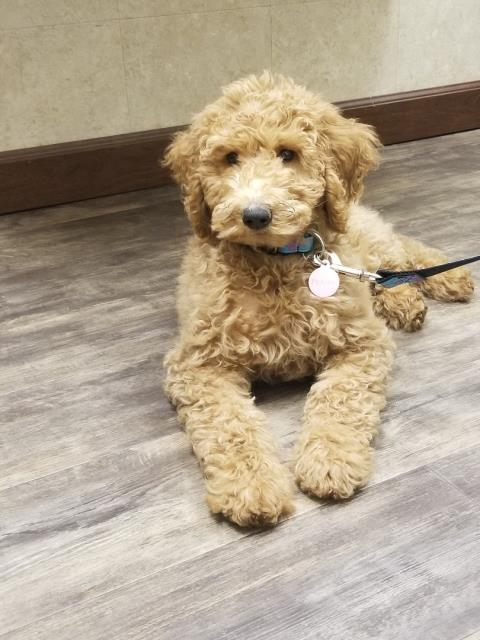 Look at this adorable pup waiting nicely for his vaccinations in Pensacola, Florida!
