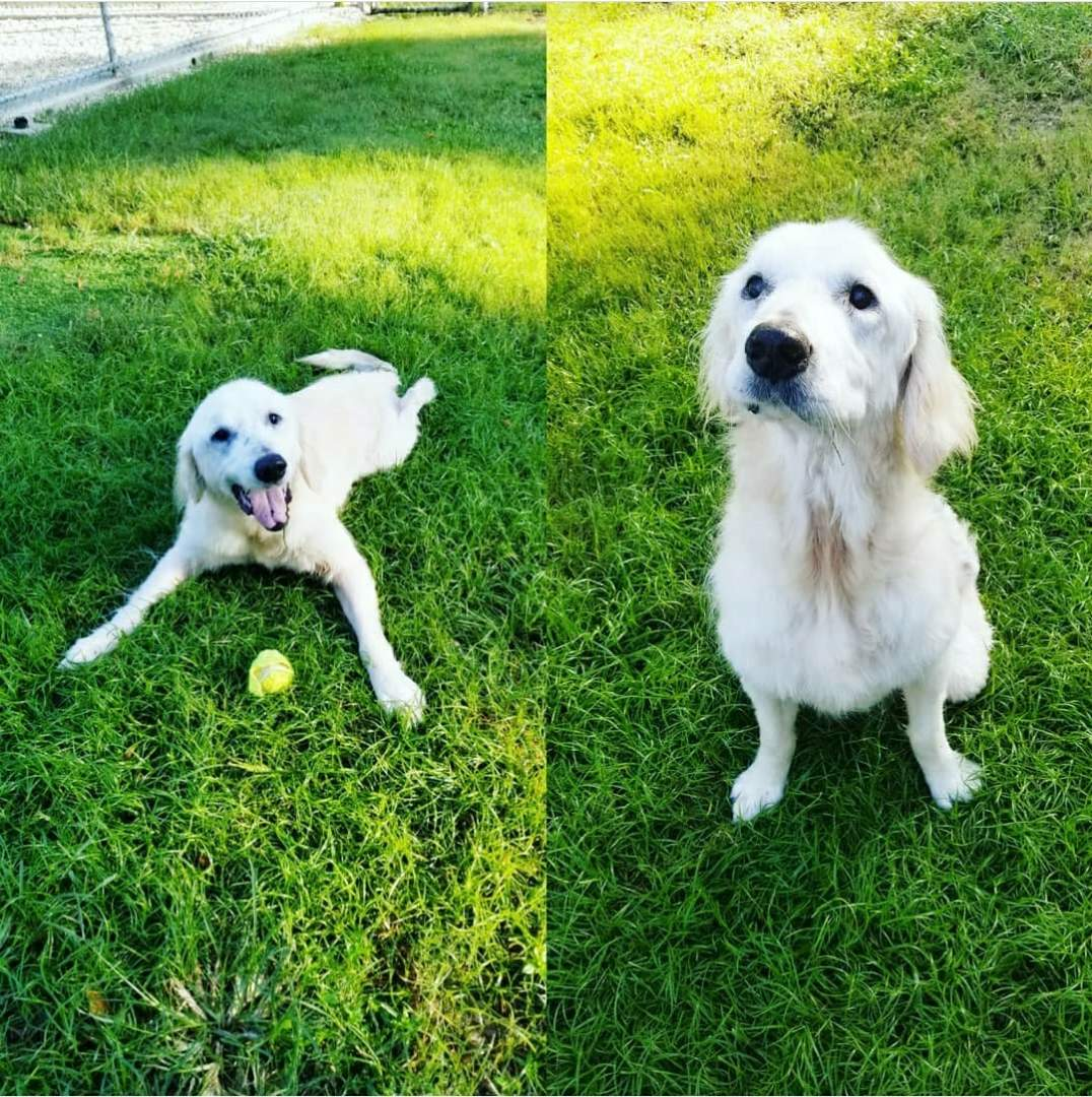 Sweet Jackson is visiting the pet hotel and enjoying his outside playtime zoomba session. Jackson is paralyzed in his back legs, but that does not stop this sweet boy from enjoying life!