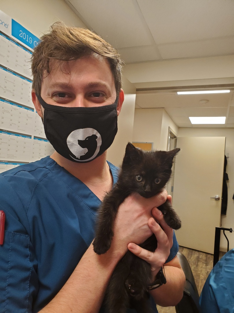 Oliver the little black kitten is ready for Halloween!  He's getting his kitten vaccines today at Davis Animal Hospital to keep away the scary viruses that can make him sick! No tricks here, only treats!