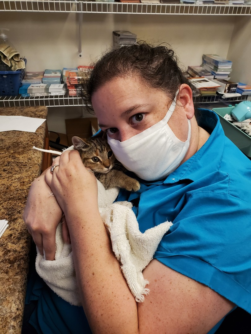 Sweet little kitten with a broken tail gets extra love at Davis Animal Hospital.