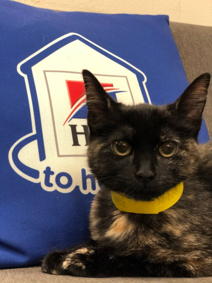 Barbara is so photogenic! This pretty kitty came in for her kitten boosters, annual blood work, and flea/ heart worm prevention. What a good girl!