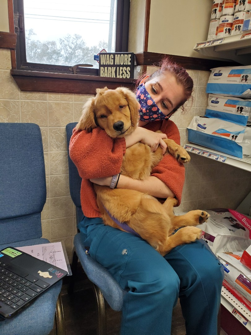 Little Lucy the Golden Retriever puppy came to our animal hospital in Pensacola today for her puppy boosters and to check her eye. She did great!