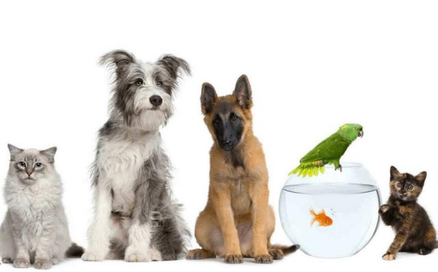 Dog Hotel Near Allentown FL : We understand how difficult it can be to leave a pet behind while you are traveling, so let us offer the very best for your furry kids.  Check Our Services Here: https://www.davispetvet.com/serviceslanding