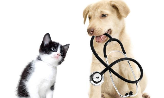 Veterinarians Near Bagdad FL : Davis Animal Hospital is a full-service, medical veterinary center giving a large range of veterinary services for the animals you love most.  Visit Us : https://www.davispetvet.com/