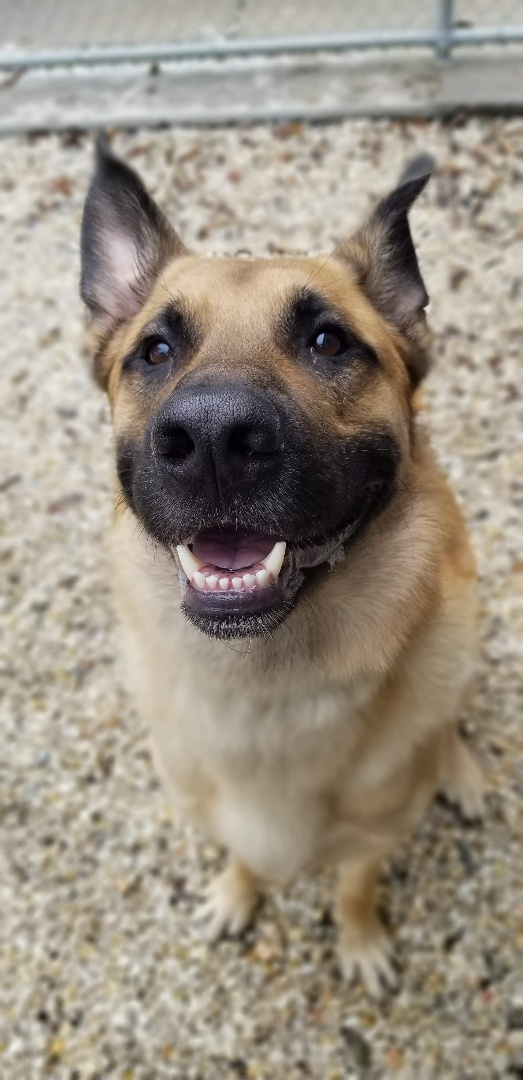 Look at that big smile! Cedar is such a happy boy. 🥰😁🐾   #petsofinstagram #petfriendly #pethotel #petboarding #veterinarymedicine #veterinarian #doglife #doglover #dogs #dogsofinsta #dogsofinstagram #shepardmix #shepardsofinstagram #dogsmiles #dogsmakelifebetter