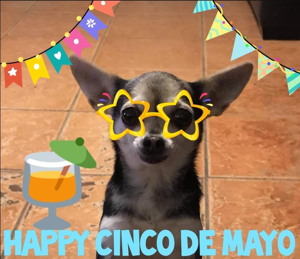 Happy Cinco De Mayo from Chica! 😍🥳❤🐶🐾🌮🍹🎉   #cincodemayo2021 #pensacolaflorida #veterinaryclinic #AnimalHospital #veterinarymedicine #veterinarylife #doglover #chiuahuasofinstagram #chihuahualove #dogsofinstagram #doglover #dogstagram