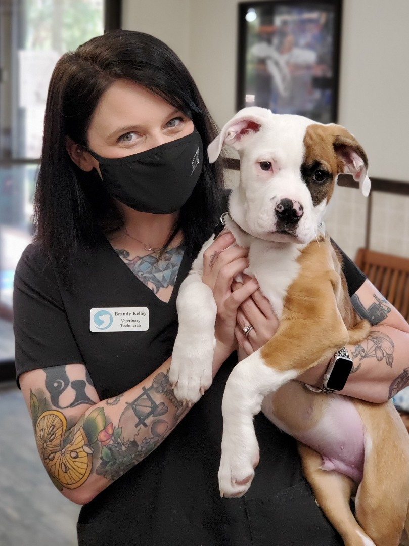 This cute baby came in today for his first puppy visit at our animal hospital in Pensacola! We love Spot!