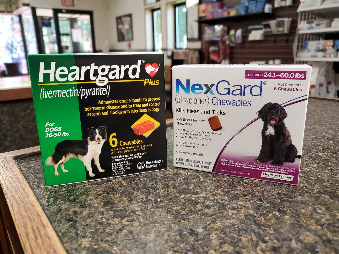 Need to know how to prevent parasites in dogs in Pensacola? Look no further! Heartgard protects against heartworm disease and intestinal worms and NexGard protects against fleas and ticks! Call us today to purchase these medications.  (Your pet must have a current exam at our office.)