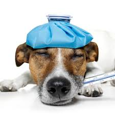 As the top animal hospital in Pensacola , we also provide diagnosis, medical care and treatment for existing health conditions.
