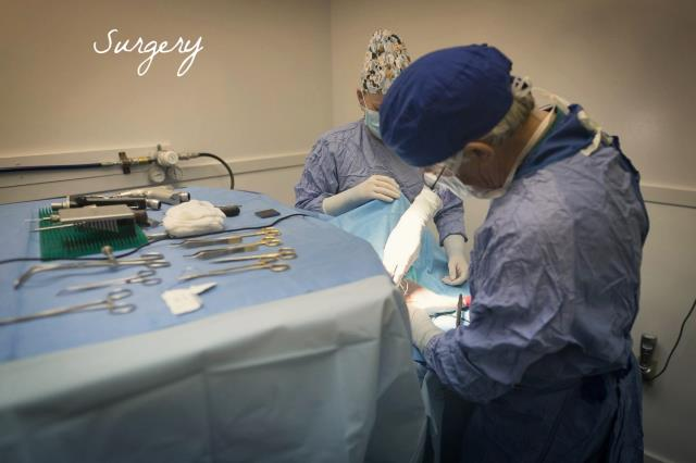 We offer extensive services - from general exams and wellness care to advanced surgeries.