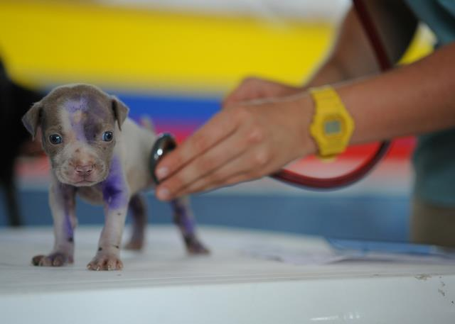 We also provide immediate care for pets that have been injured.