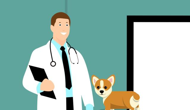 Davis Animal Hospital prioritize the health, comfort, and safety of your pets.