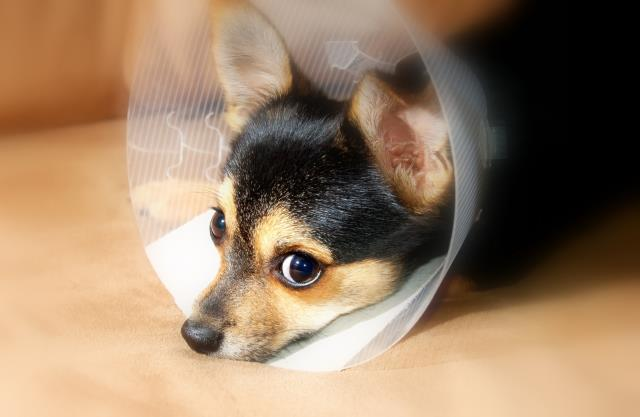 Yes, pets can be allergic too, as well as vulnerable to specific medical threats. But you will learn more about this when you visit us at Davis Animal Hospital in Pensacola.