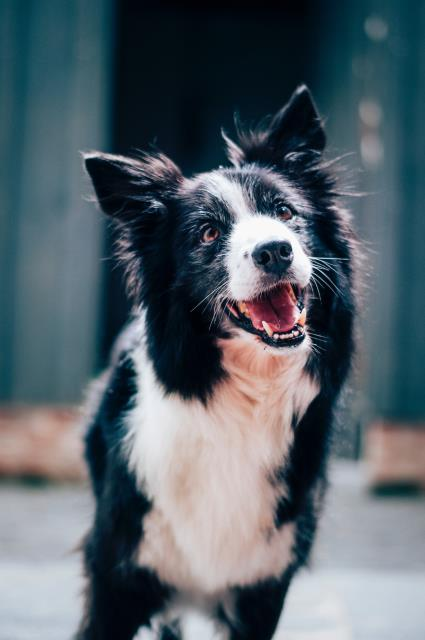 Your pet requires special dental care for him or her to thrive.