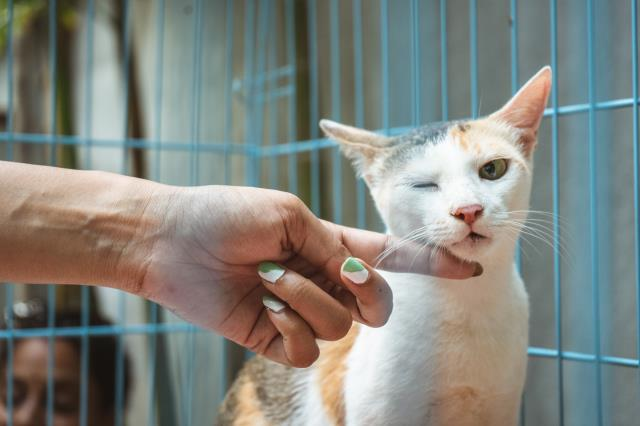 We strongly advise pet owners to visit our clinic regularly for routine checkups and examinations.