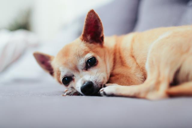 Can't go on vacation with your pet? Book them today. Visit Us Here: https://www.davispetvet.com/hotel