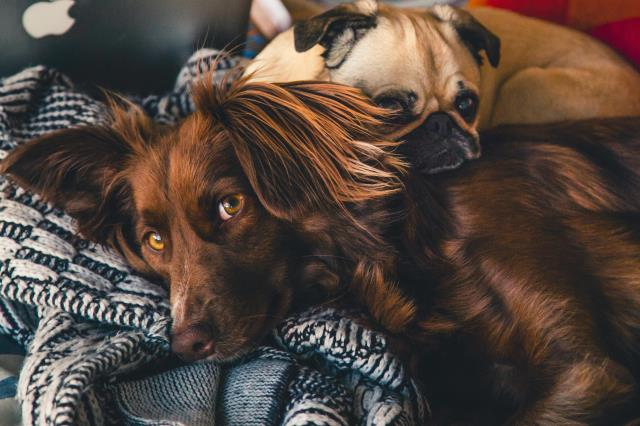 Davis Animal Hospital also offer pets of every age and stage of life a safe, comfortable home away from home.