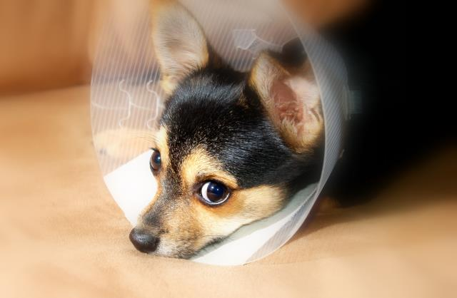 Expect a call from us within a few days after we receive the referral form from your veterinarian.