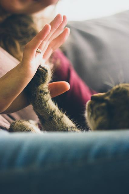 Pets need care and attention to keep them healthy, happy, and safe.