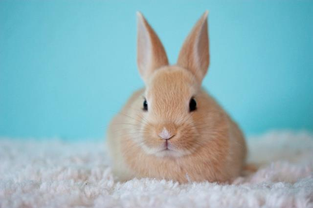 We offer our services and cater to the needs of a wide variety of pet species including those of an exotic nature such as parrots, lizards, bunny rabbits and even tiny mice.