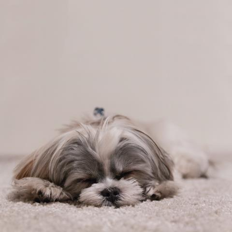 If anything is not to your liking, please inform our wonderful Hotel Attendants and we will do our best to make your pet as comfortable as possible!