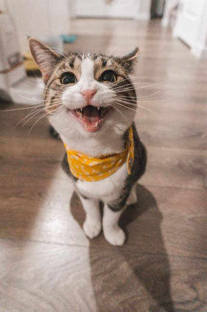 Our veterinarians will sometimes see an otherwise kind pet turn aggressive due to the oral pain of a broken tooth or a kitty begin to urinate outside of the litter box due to a urinary tract infection.