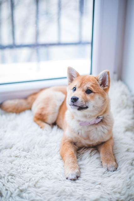 Panama City, FL - Microchipping procedure is quick and inexpensive and provides great peace of mind for you and your pet in the event they were to ever become lost.