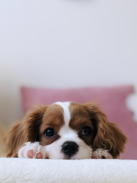Living in Florida we see a lot of itchy pets! If you have noticed your pet itching, biting, licking or chewing at himself it's time for a visit.
