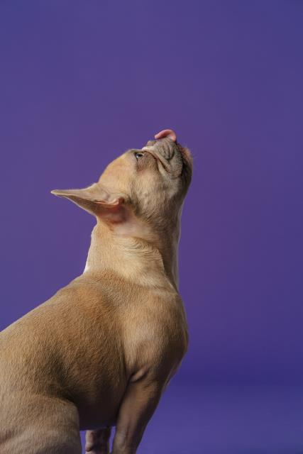 Itchy pet? See the vet! Skin that is red, dry, flaky or oozing may be signs of other problems that need to be addressed.
