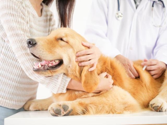 Davis Animal Hospital in Pensacola, FL is a full-service, medical veterinary center giving a large range of veterinary services for the animals you love most.