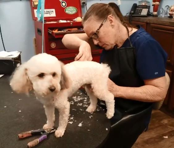 Getting fluffed and prepped for the holidays by our fantastic groomer, Holly!  Our boarding and grooming facility is top notch here in Pensacola.  We love bathing and giving haircuts to our pups and cats!