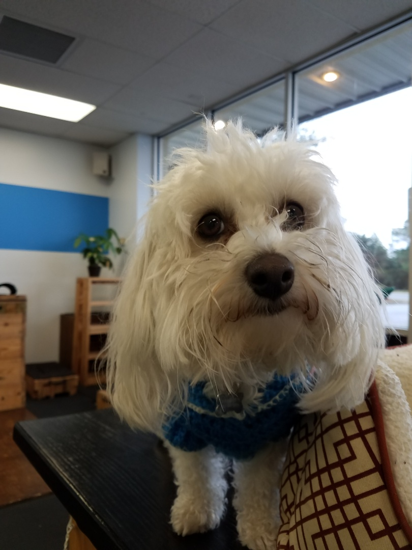 Toby is getting a headstart on his weightloss goals! Does your pet need to lose weight? Davis Animal Hospital can help your pet be the best looking pooch in Pensacola!