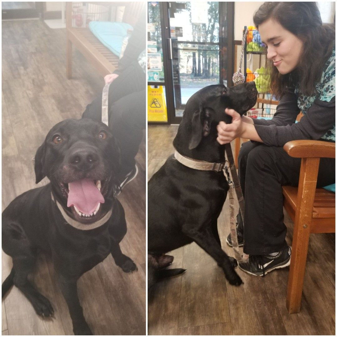 Our amazing kennel technician Rosie brought Rex in today for a physical exam with Doctor Amberly Sokoloff! That sweet smile got some yummy treat and lots of love.