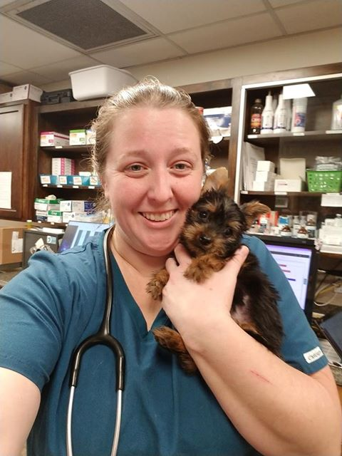 """Boy"" came in to our veterinary hospital today for his first puppy visit!  We love baby puppies and kitties!  He got an veterinary examination and will be back to get his puppy vaccines later."