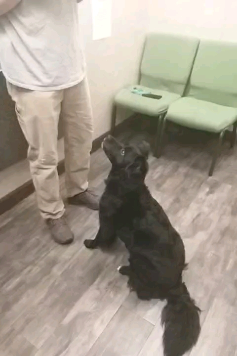 Leah came to visit us today for her annual vaccinations and wellness check. While here she decided to share her tricks with us!