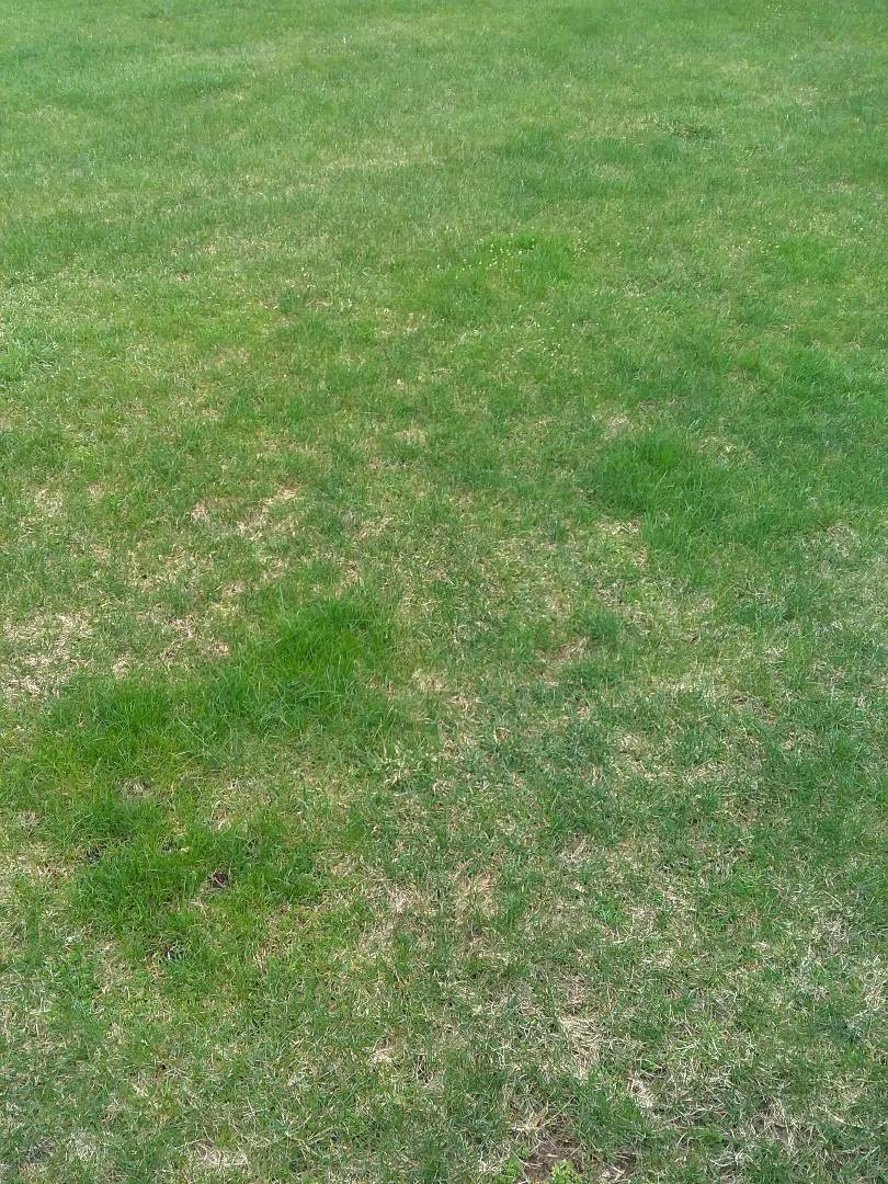 Gladstone, NJ - Fertilization, lime, grub and insect control, weed control being applied; Lawn Care!!!