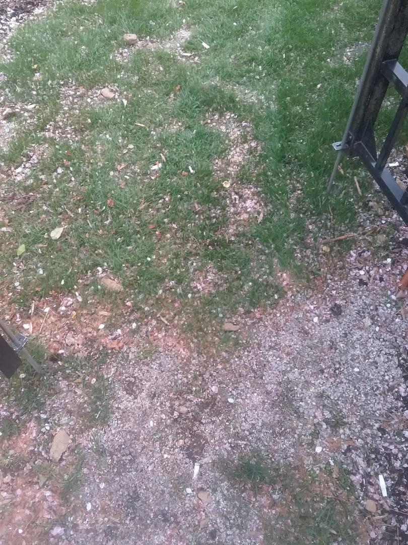 Wharton, NJ - Applying granular fertilizer, lime, treating for weeds, and grub and insects for homeowners 7 application lawn care program!!! =)