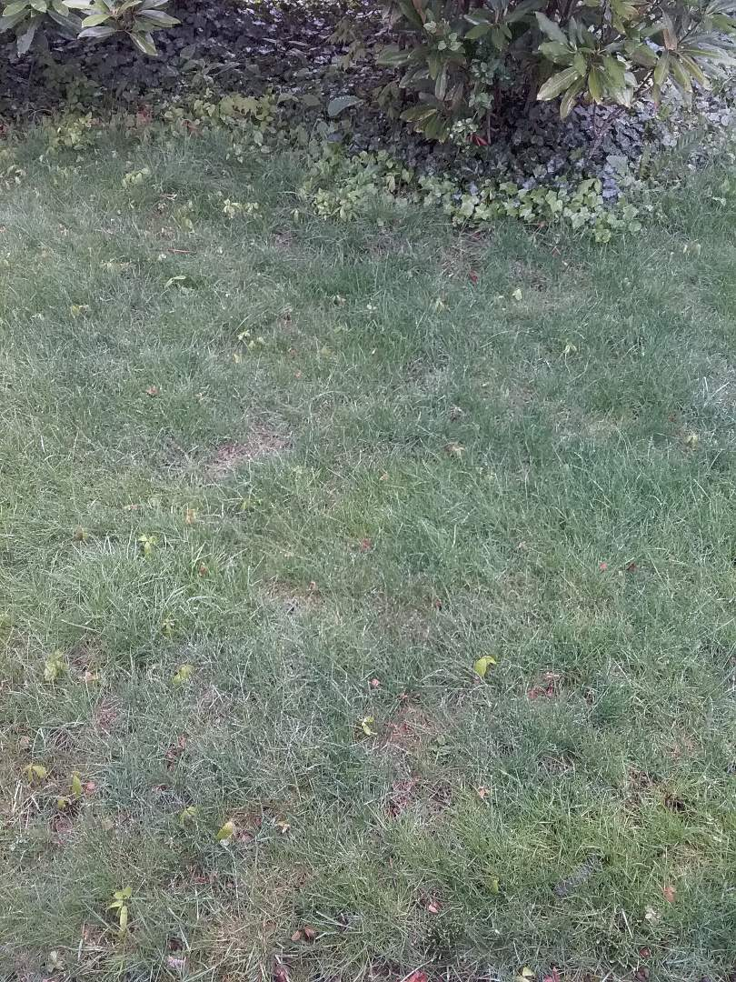 Wayne, NJ - Applying granulated fertilizer, lime, and treating for weeds for homeowners 7 application lawn care program backed by a green lawn guarantee!!! =)