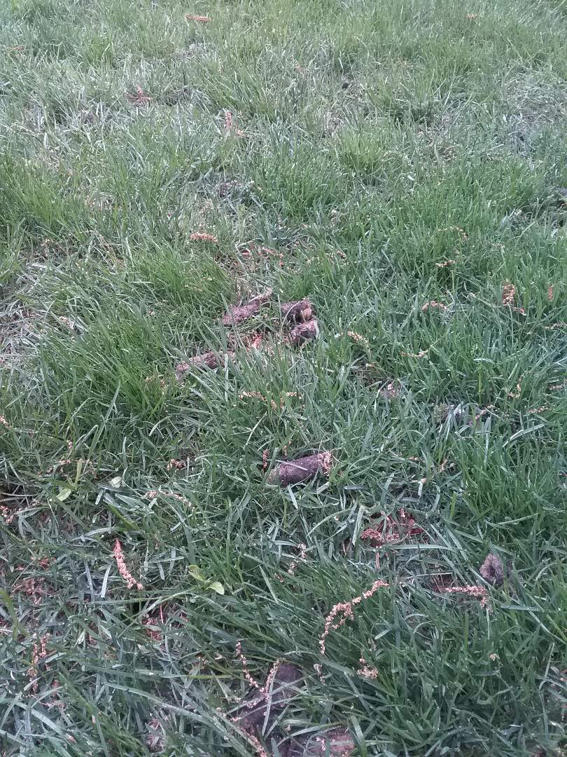 Mendham, NJ - Aersted lawn, applying pre emergent crabgrass fertilizer, lime, and treating for weeds for a guaranteed green lawn!!! =)