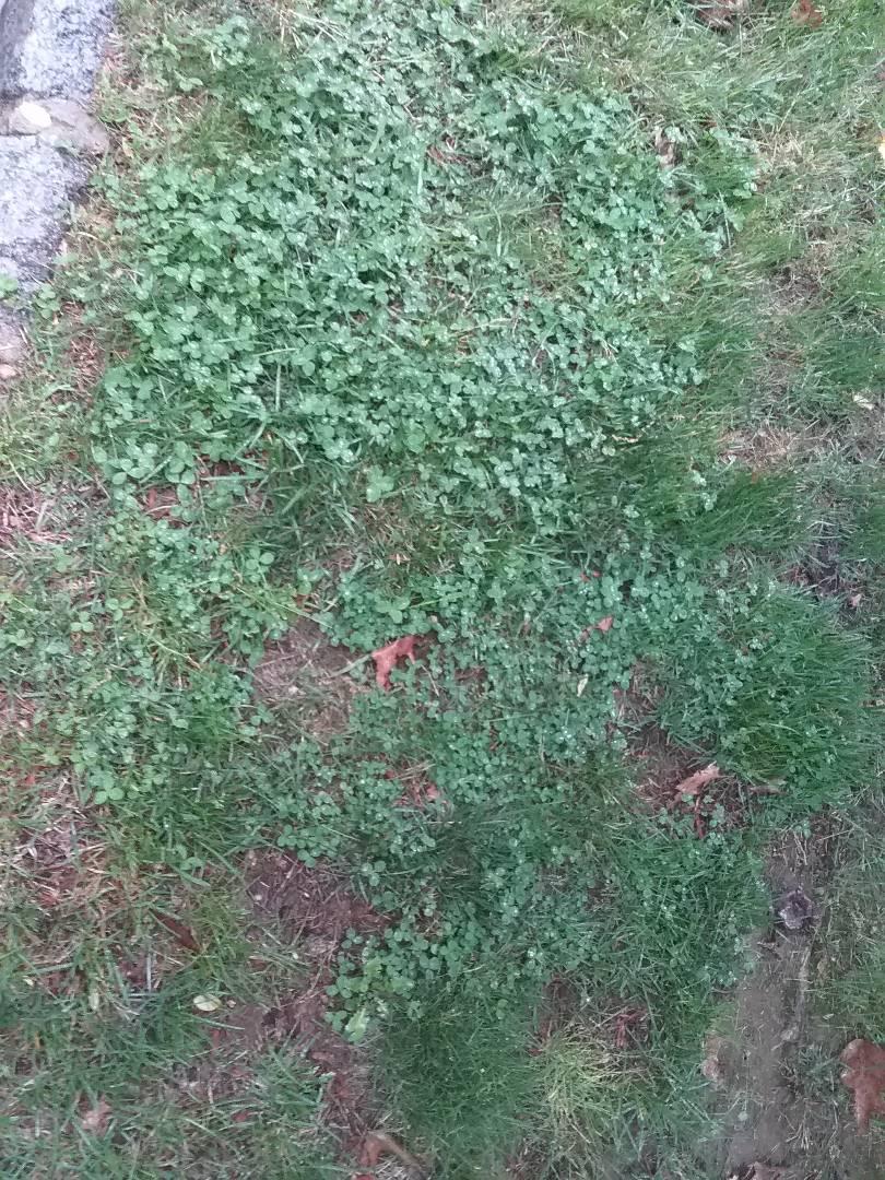 Morristown, NJ - Applying granulated fertilizer for a guaranteed green lawn!!! =)