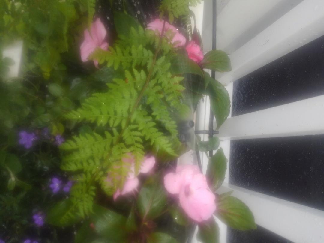 Mountain Lakes, NJ - Install pot tubing for plant box on sprinkler line