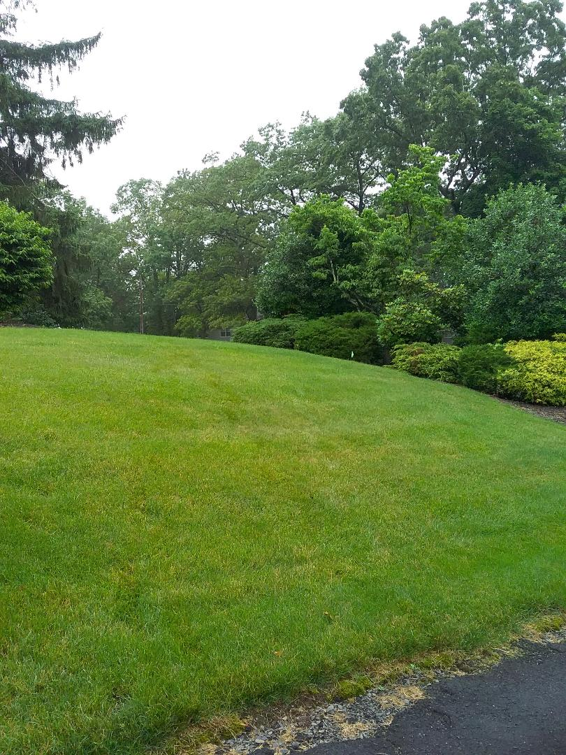 Caldwell, NJ - Applying granulated fertilizer, lime, treating for weeds, insects and grubs for a guaranteed green lawn!!! =)