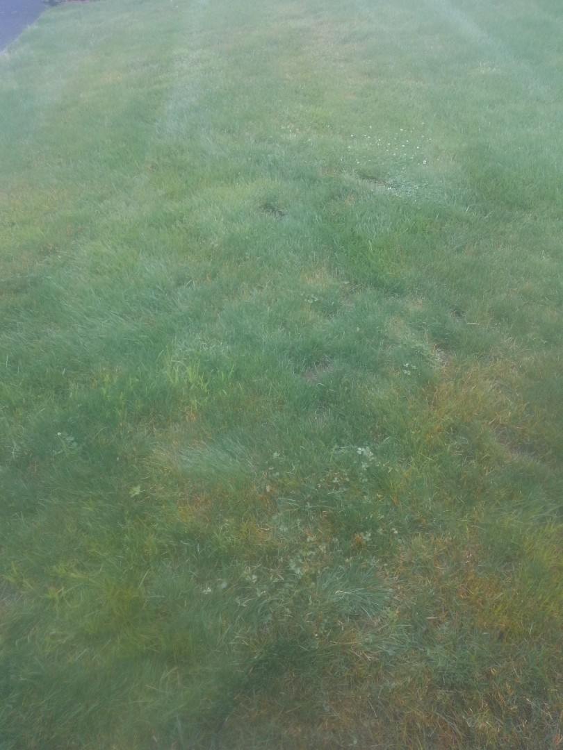 Verona, NJ - Measure property for fertilization and weed control