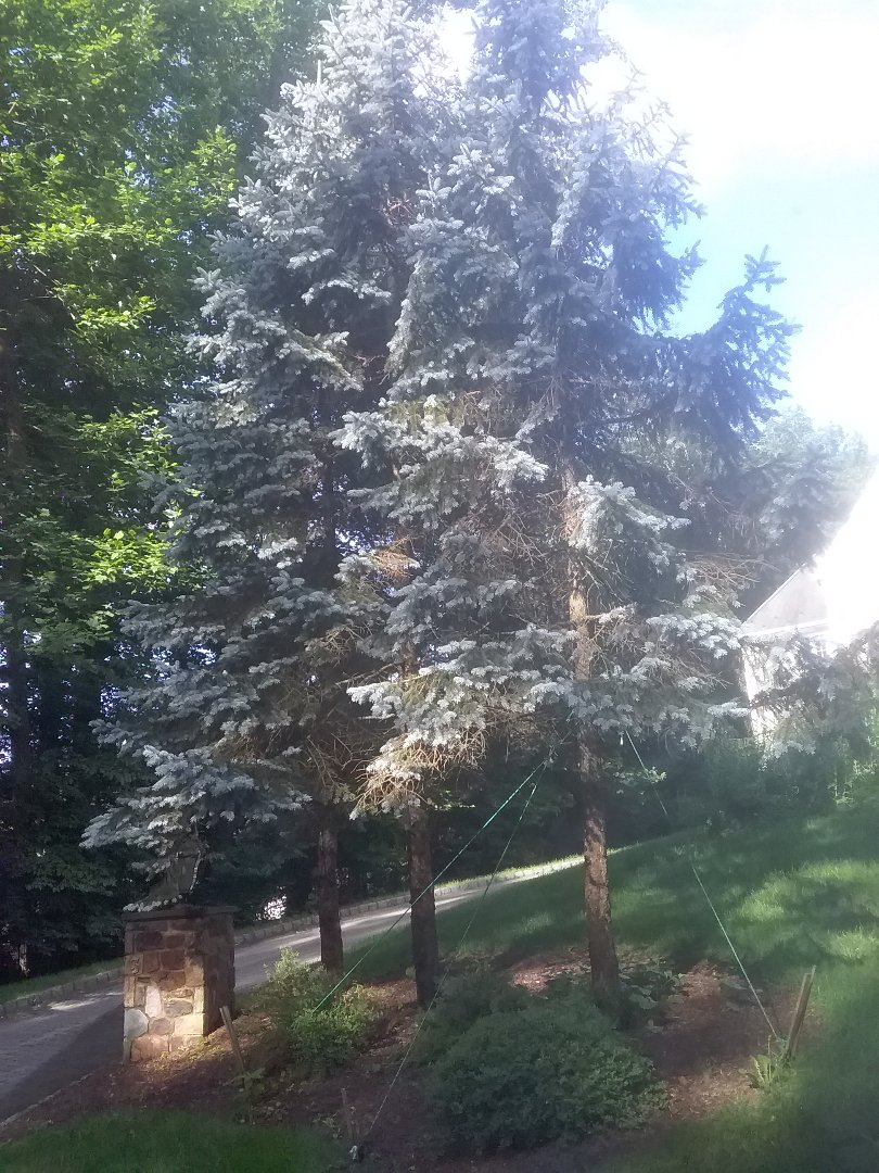 Warren, NJ - Buried sprinkler heads and lines for sytem