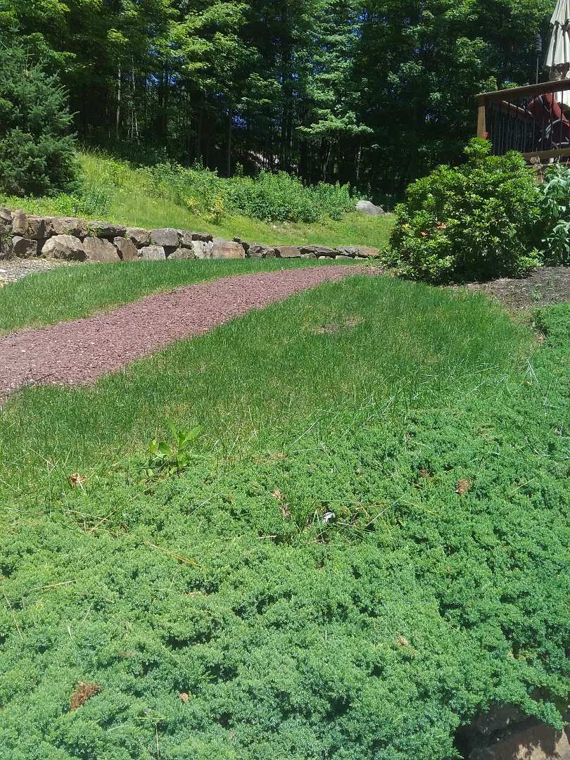 Mount Olive Township, NJ - Applying granulated fertilizer, lime, treating for weeds, insects and grubs, in preparation for seasonal aeration. All backed by a green lawn guarantee!!! =)
