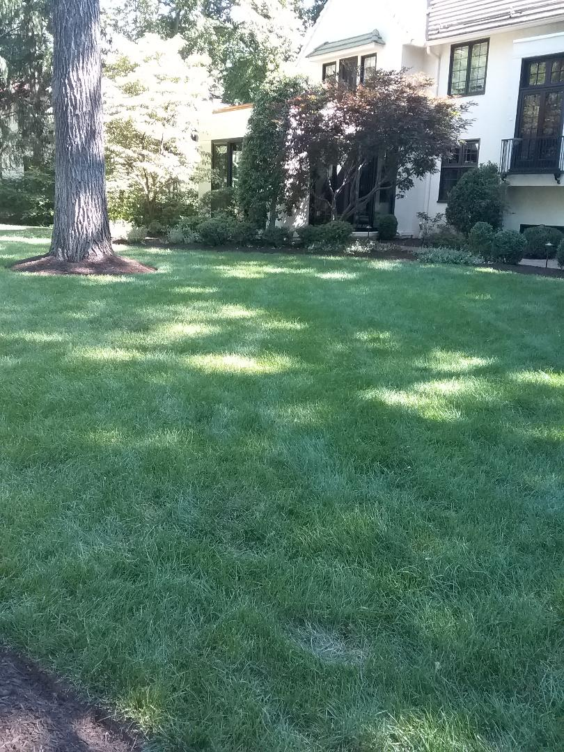 Glen Ridge, NJ - Applying granulated fertilizer, lime, treating for weeds, insects and grubs, in preparation for seasonal aeration, all backed by a green lawn guarantee!!! =)