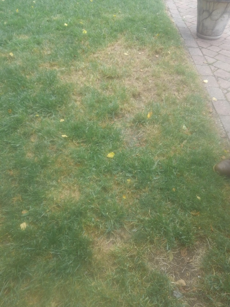 Montclair, NJ - Deescused fertilization and areation with customer